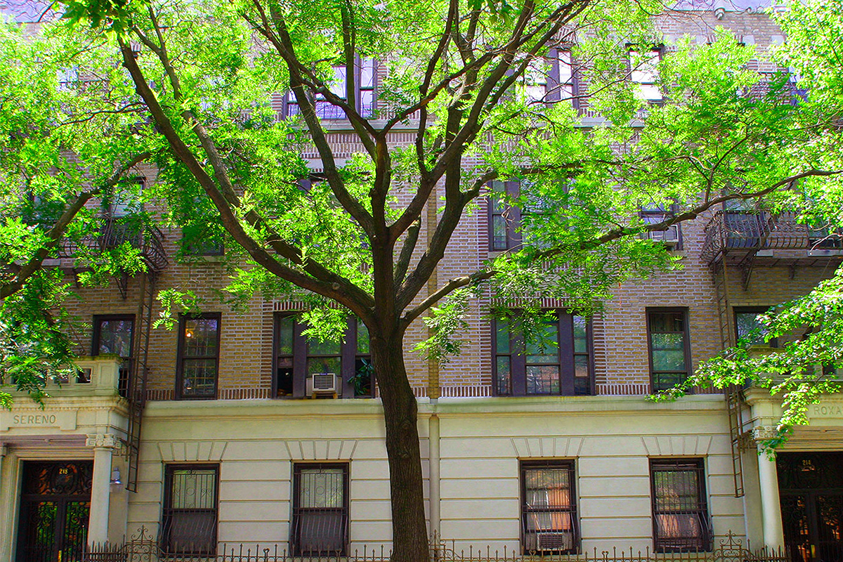 A photo of the Prospect Place building from under the green trees in Brooklyn, New York.